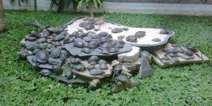 Resultado de imagen de jardin tropical atocha tortugas